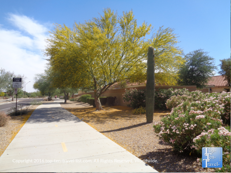 Pretty yellow tree along the Scottsdale Greenbelt