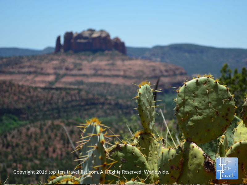Prickly pear cactus with Cathedral Rock in the background along the Sedona Airport Mesa loop trail