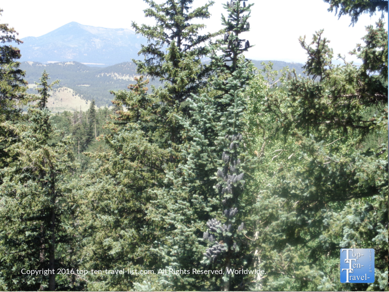 Close up of the beautiful pines from the AZ Snowbowl Scenic Chairlift ride