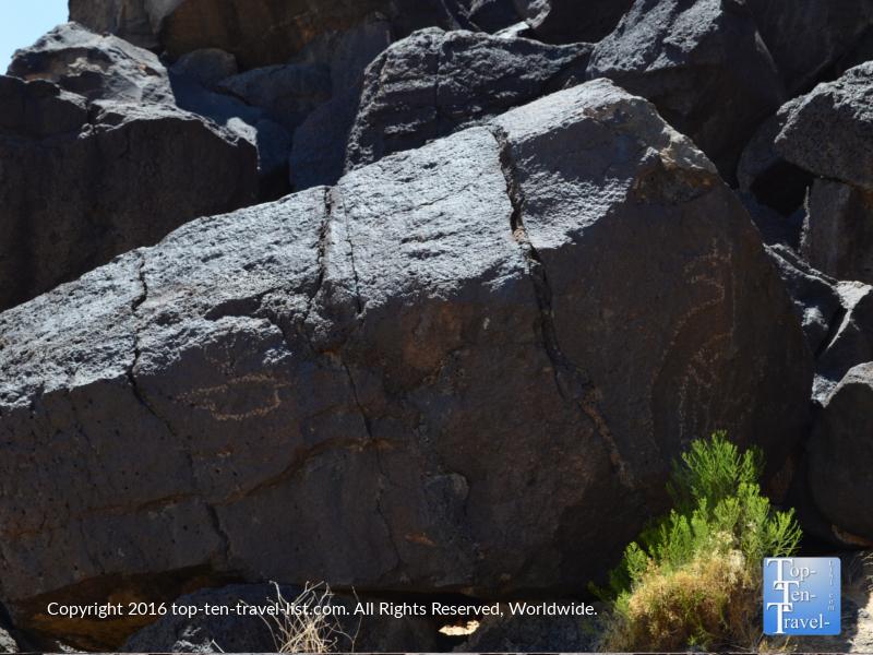 Petroglyph at Petroglyph National Monument in Albuquerque NM 19