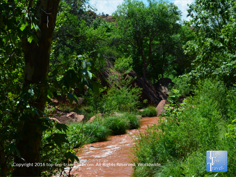 Trees surrounding the creek on the Templeton Trail in Sedona AZ