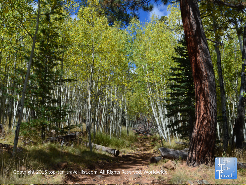 Views of Flagstaff's Weatherford Trail in early fall
