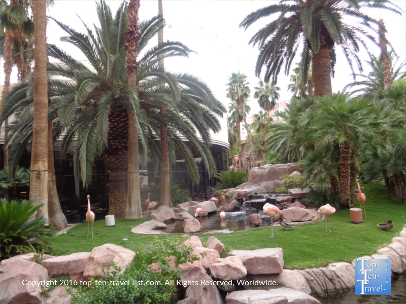 Tropical plants and flamingos at The Wildlife Habitat on the Las Vegas Strip