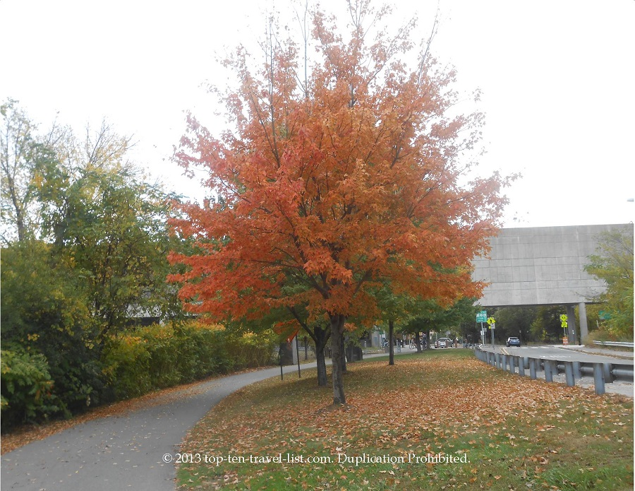 Striking red foliage along the Minuteman Bikeway in Boston, Massachusetts