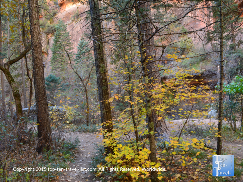 Fall colors on the West Fork hiking trail in Oak Creek Canyon in Sedona