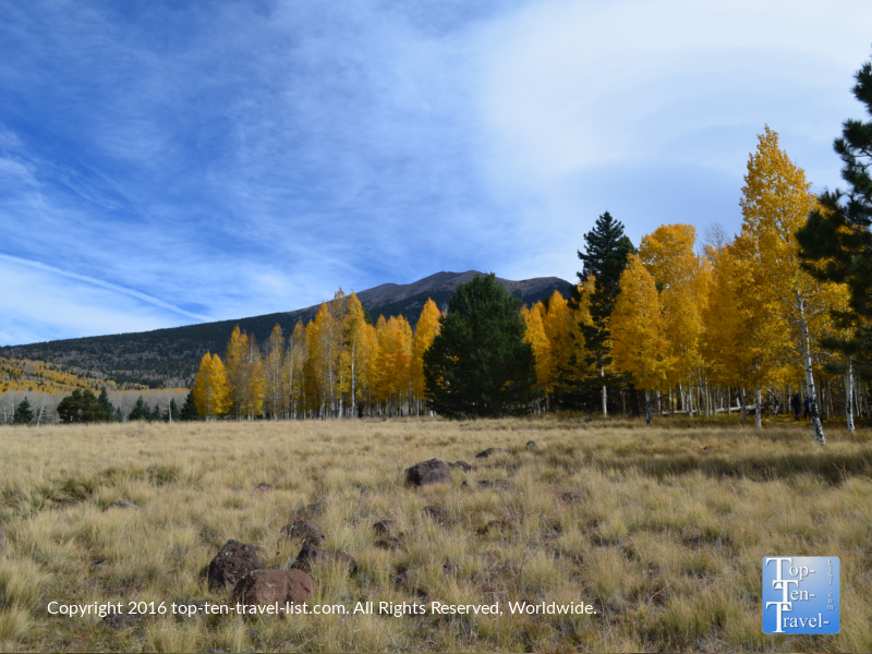 Colorful fall foliage along the Aspen Nature Loop in Flagstaff, Arizona