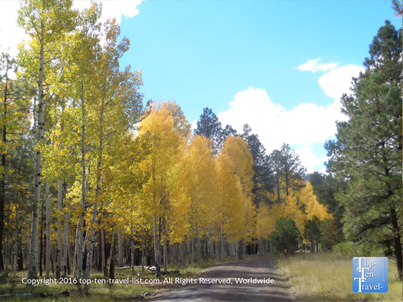 Fall foliage along FR 151 in Flagstaff, Arizona