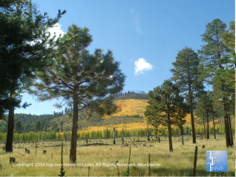 Bright fall foliage on the mountains surrounding Flagstaff, AZ