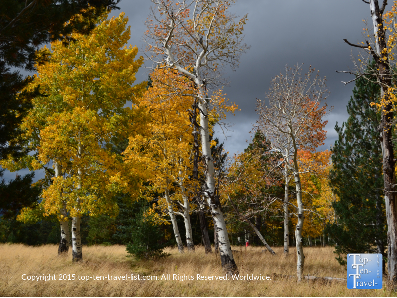 Fall photography along the gorgeous Aspen Nature Loop in Flagstaff, Arizona