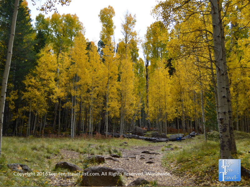 Fall foliage along Snowbowl Road in Flagstaff, Arizona