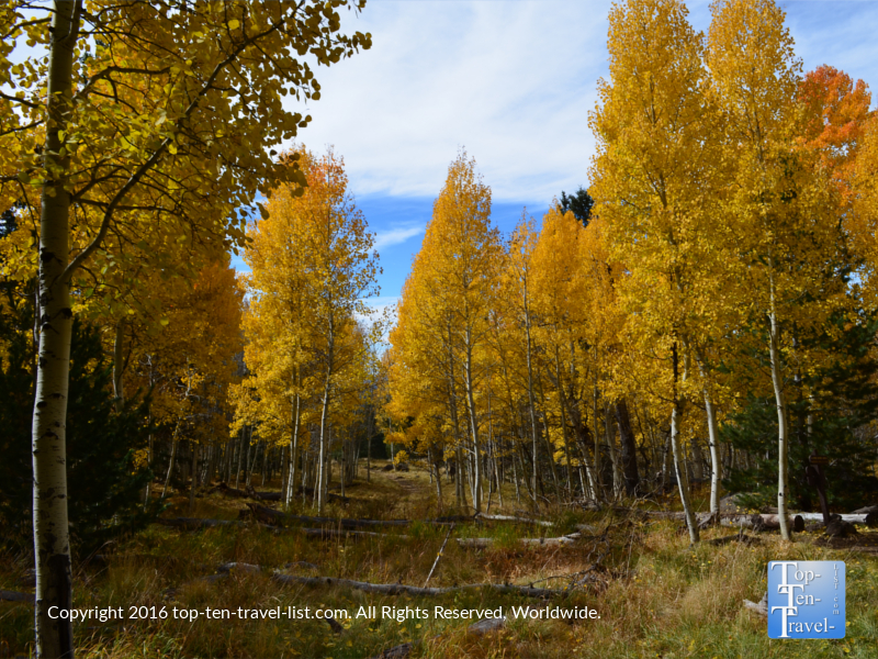 Fantastic fall foliage on The Aspen Nature Loop in Flagstaff, Arizona
