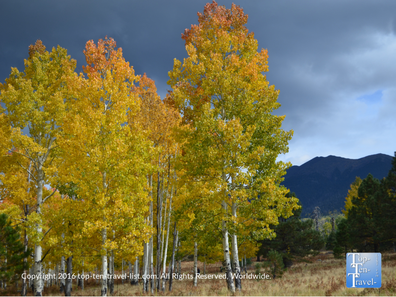 Gorgeous fall colors at Arizona Snowbowl