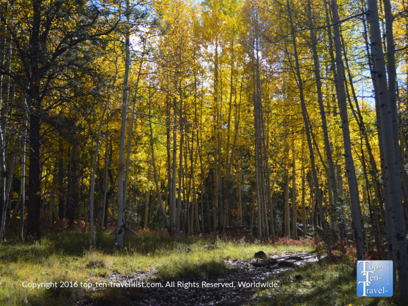 Gorgeous fall foliage along the Veit Springs loop hiking trail in Flagstaff, Arizona
