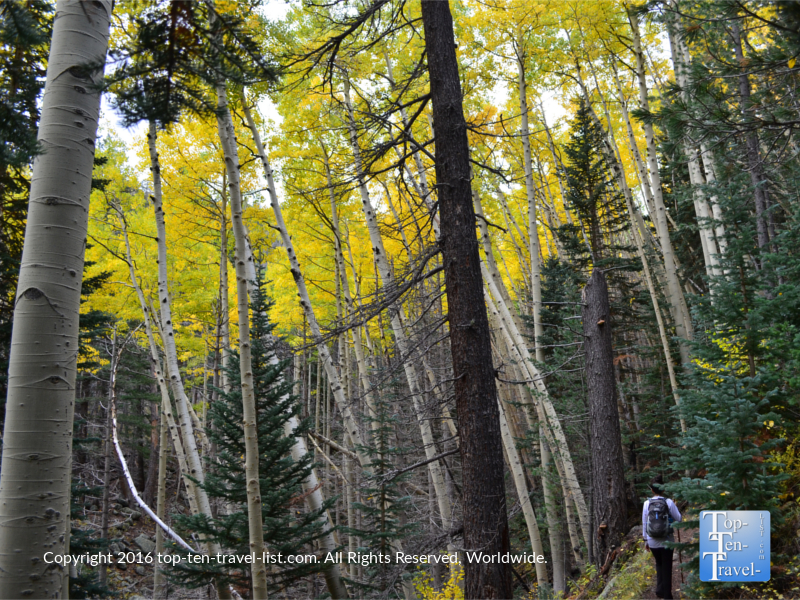 Hiking the Bear Jaw Trail in Flagstaff during peak fall season