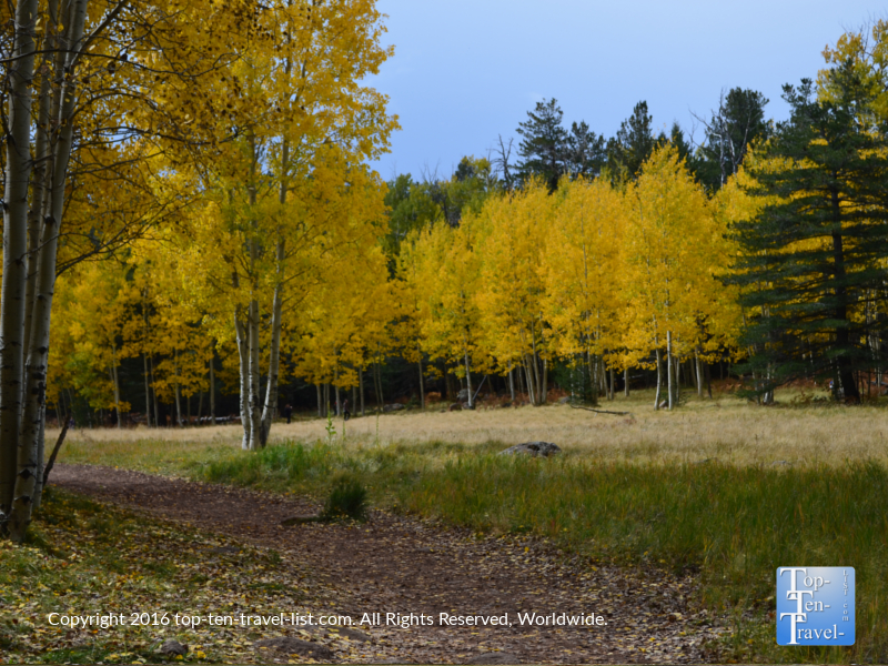 Lovely fall foliage on the Arizona Trail in Flagstaff, Arizona