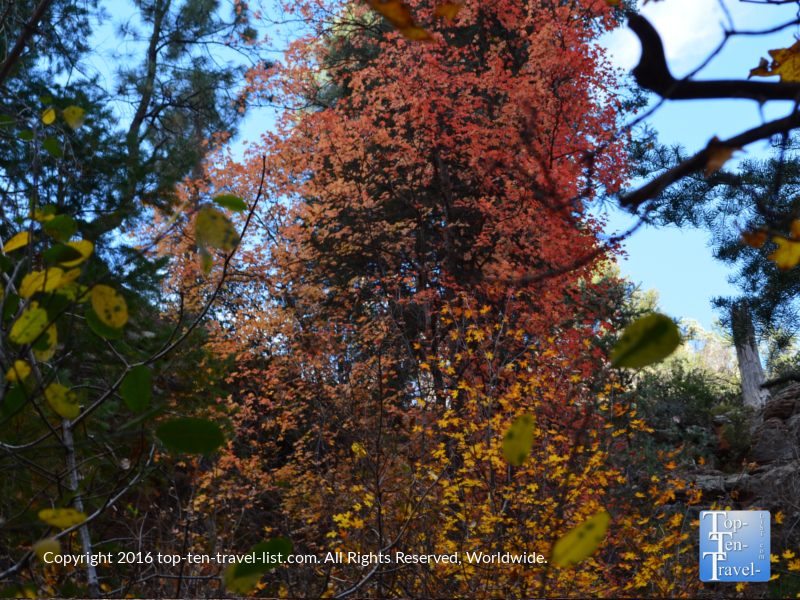 Colorful fall foliage along the West Fork Trail in Oak Creek Canyon