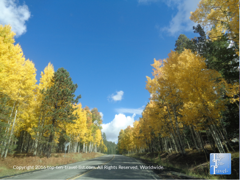 scenic-fall-drive-up-snowbowl-road-in-flagstaff