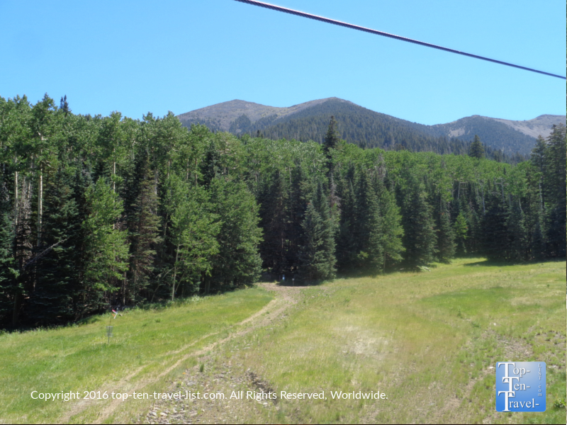 Scenic ponderosa pine and mountain views at Arizona Snowbowl