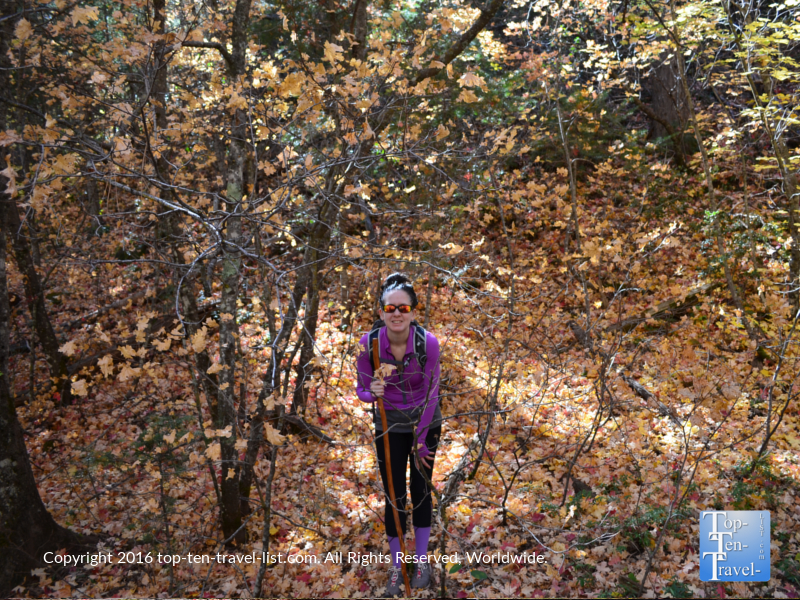 Standing amongst the golden leaves on the West Fork Trail in Oak Creek Canyon