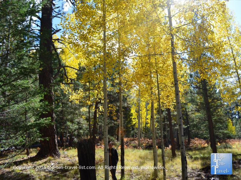 A beautiful fall walk along the colorful Veit Springs trail in Flagstaff, Arizona