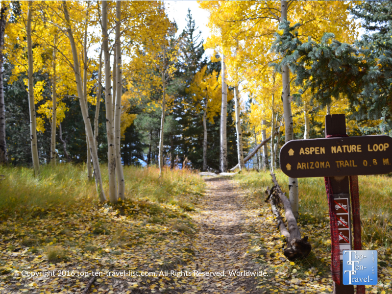 The colorful Aspen Nature Loop in Flagstaff, AZ during the fall season