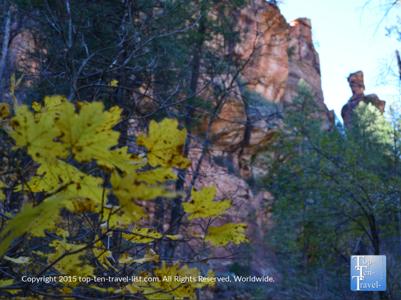 Great red rock views and fall foliage along the West Fork trail in Oak Creek Canyon