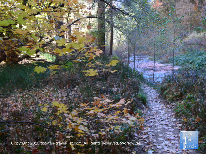 leaves-covering-sedona-west-fork-trail