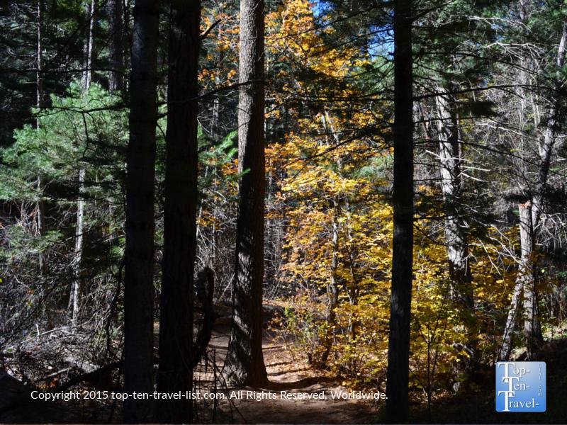 pretty-orange-foliage-on-sedona-west-fork-trail