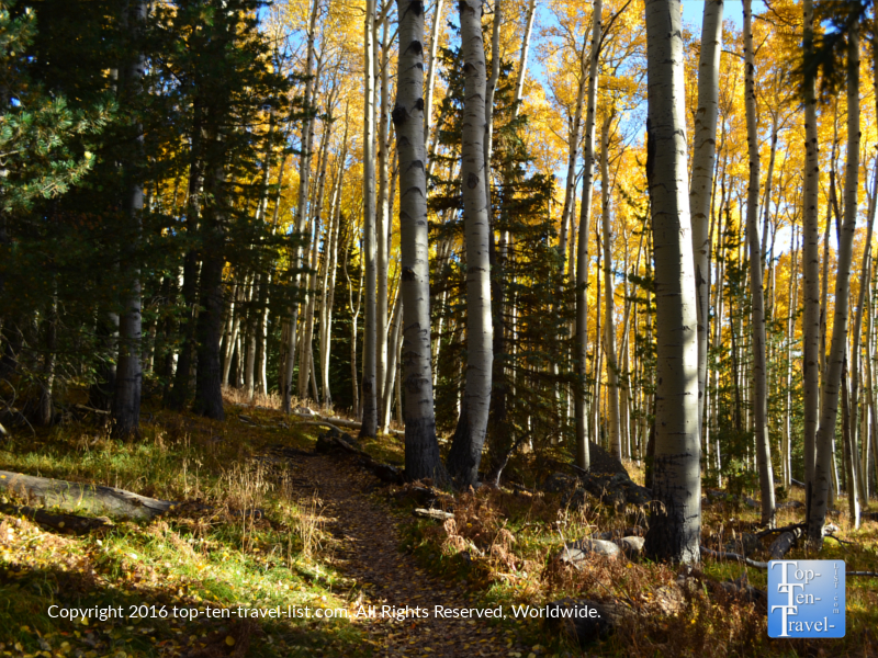 a-view-of-the-kachina-trail-in-flagstaff-in-the-fall