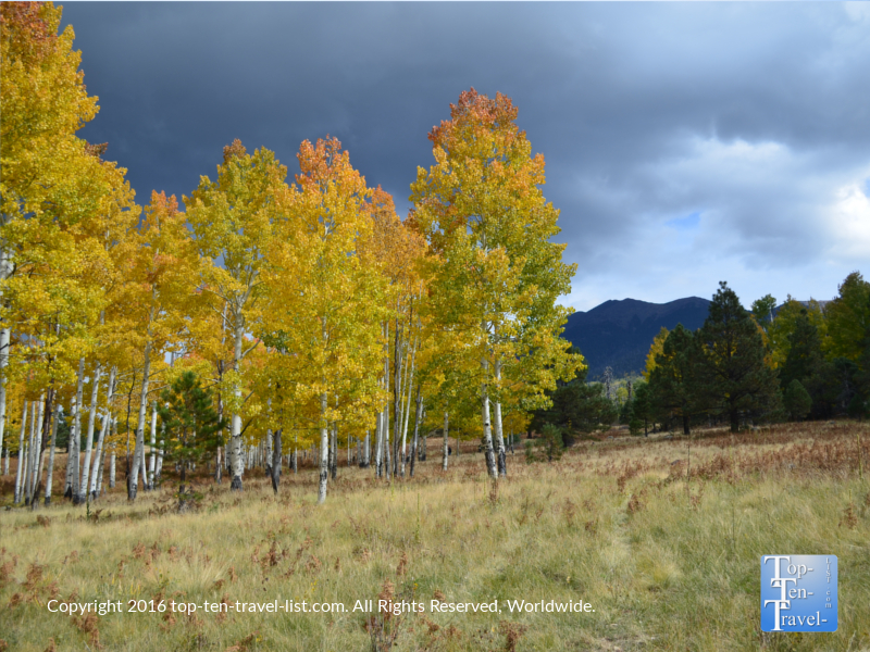 amazing-fall-scenery-on-the-arizona-trail-in-flagstaff-az