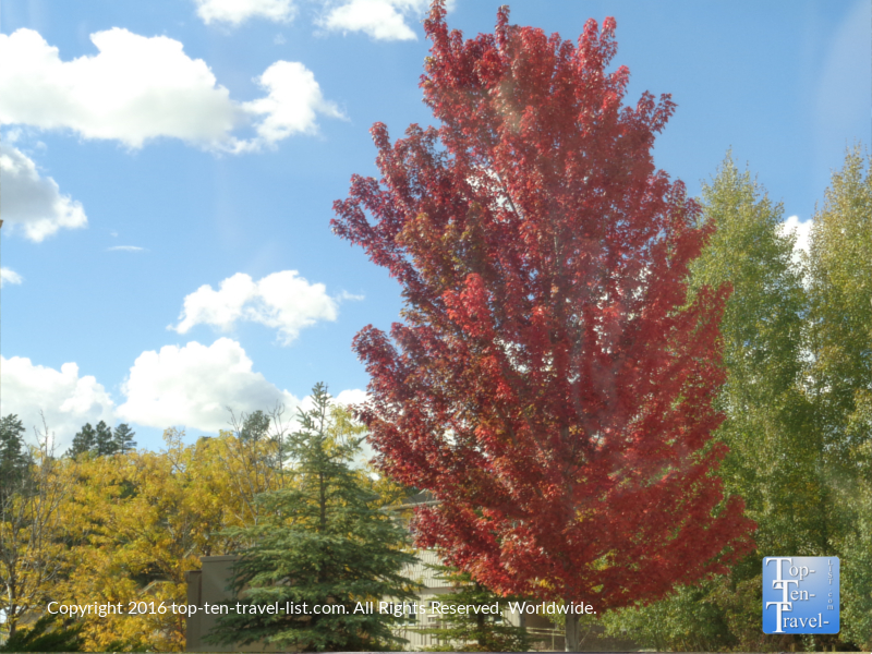 amazing-red-foliage-in-flagstaff