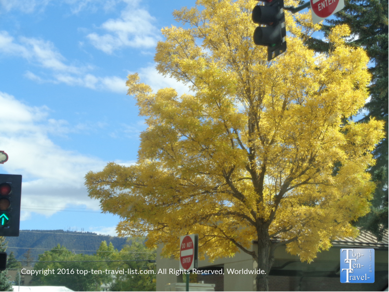 beautiful-yellow-foliage-in-downtown-flagstaff-az