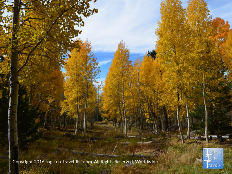 colorful-views-along-the-aspen-nature-loop-in-flagstaff-az