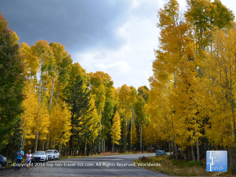 golden-aspens-lining-snowbowl-rd-in-flagstaff