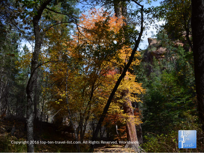 pretty-gold-and-red-foliage-along-the-west-fork-trail-in-oak-creek-canyon