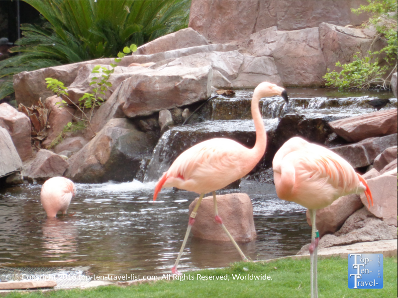 The Flamingo Wildlife Habitat in Las Vegas, Nevada