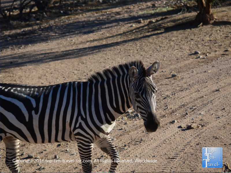 zebra-at-out-of-africa-wildlife-park