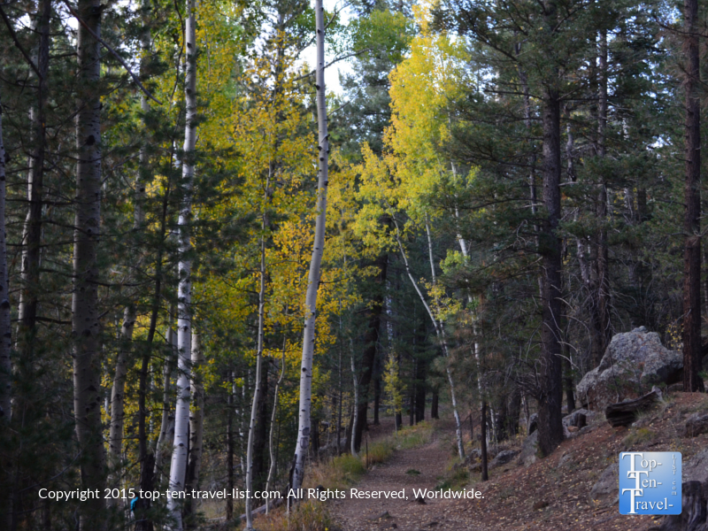 Pretty fall foliage along the quiet Veit Springs trail in Flagstaff, Arizona