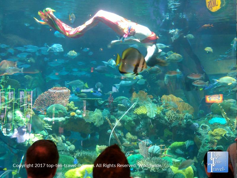 Mermaid show at the Silverton Aquarium in Las Vegas NV