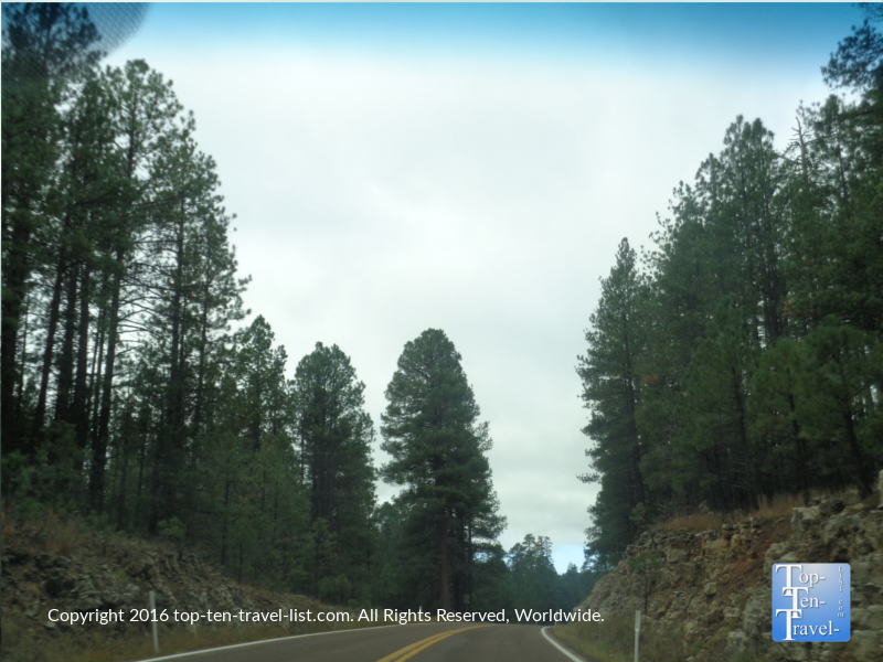 Pines lining the road near Pine Arizona