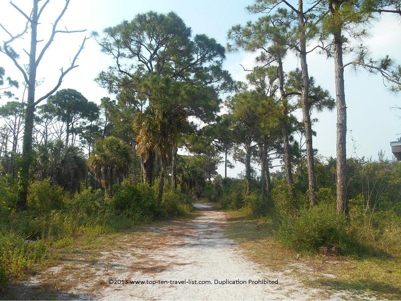 Virgin slash pine forest at Honeymoon Island State Park in Dunedin Florida