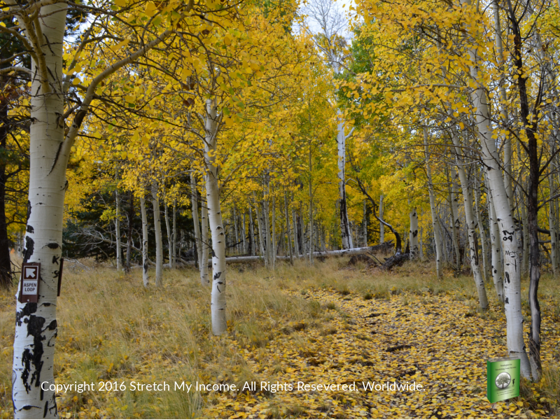 Fall leaf peeping on the Aspen Nature Loop in Flagstaff AZ