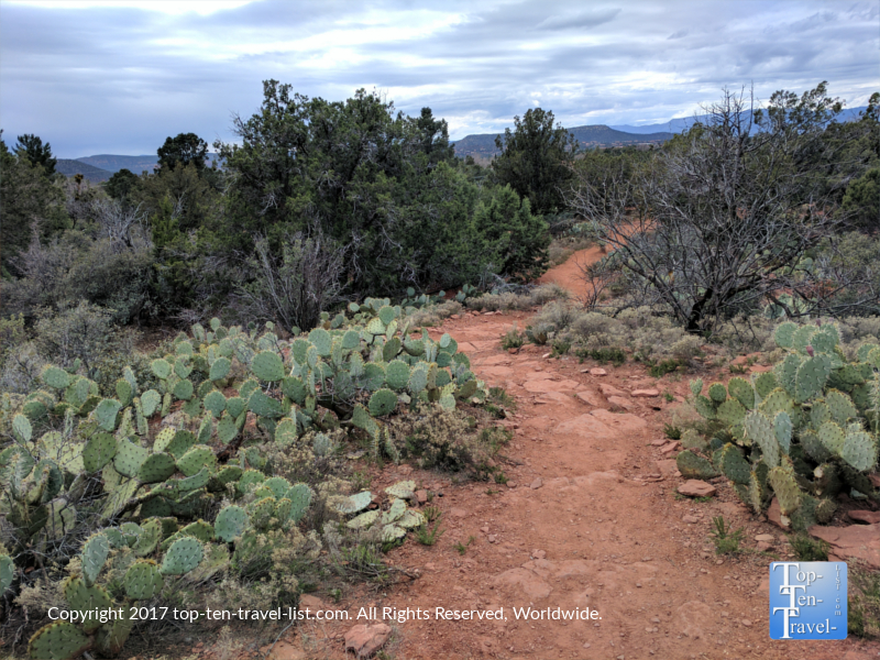 Prickly pear cacti line the Sugarloaf Trail in Sedona