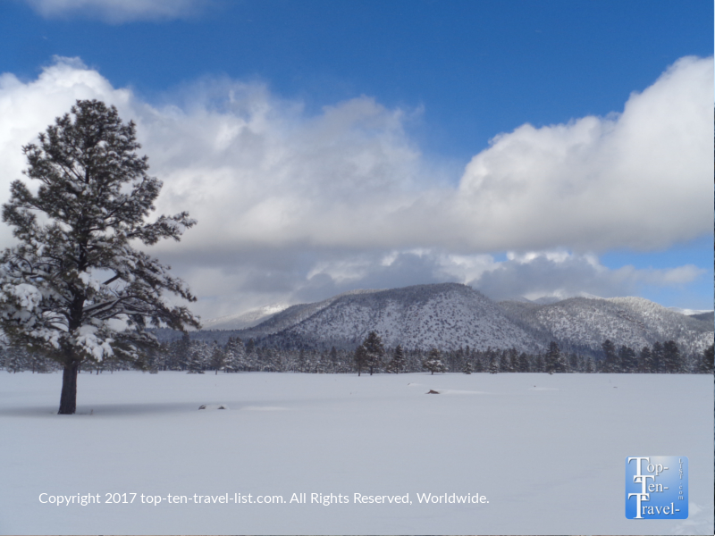 Snowy winter scenery at Buffalo Park in Flagstaff, Arizona