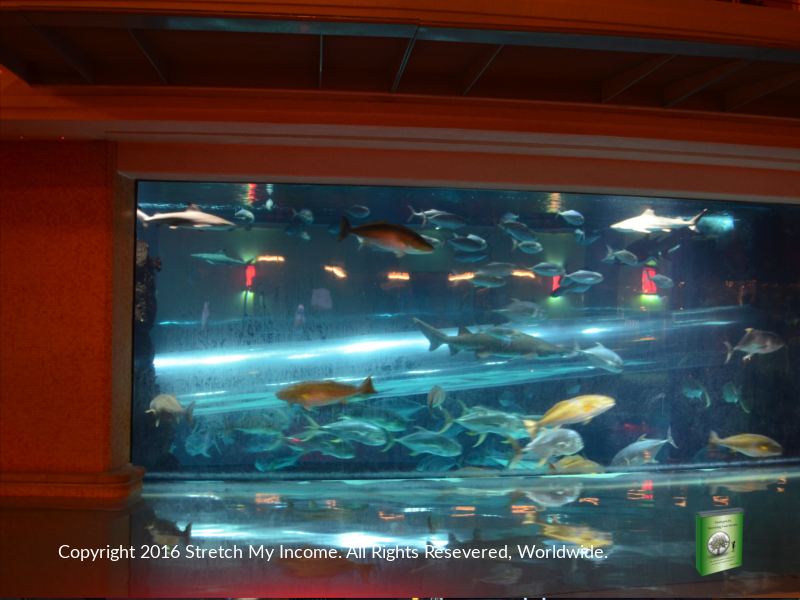 The beautiful shark tank inside the Golden Nugget on Fremont Street in Vegas