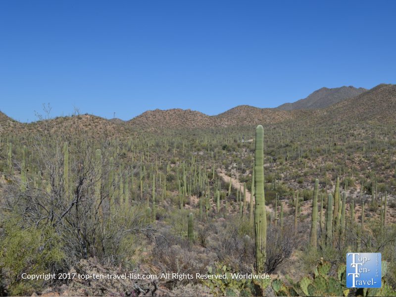 Uneding cacti views at Saguaro National Park in Tucson AZ