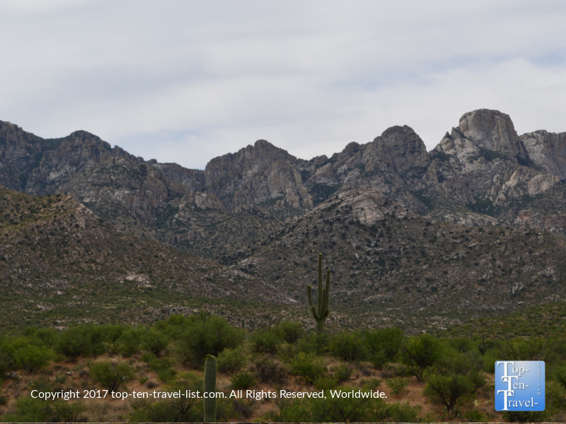 Beautiful cactus and mountain views at Catalina State Park in tucson