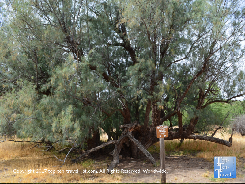 Birding trail at Catalina State Park in Tucson