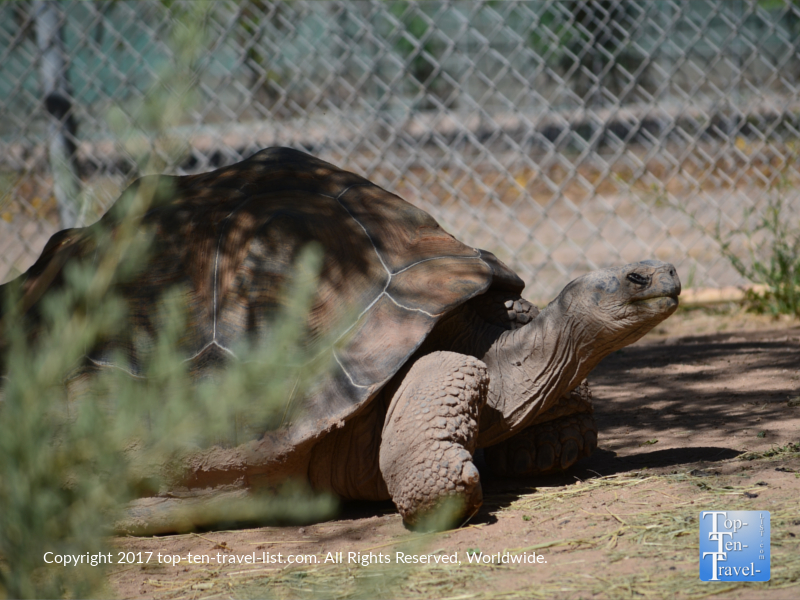 Giant tortoise at the Reid Park Zoo in Tucson
