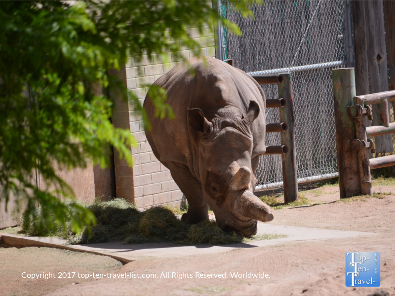 Rhino at the Reid Park Zoo in Tucson
